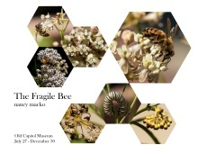 The Fragile Bee