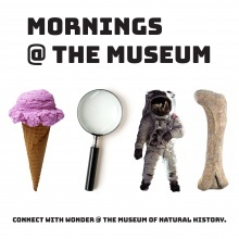 Mornings @ The Museum